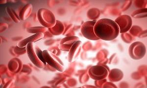 Общий анализ крови ребенка: как расшифровать результаты