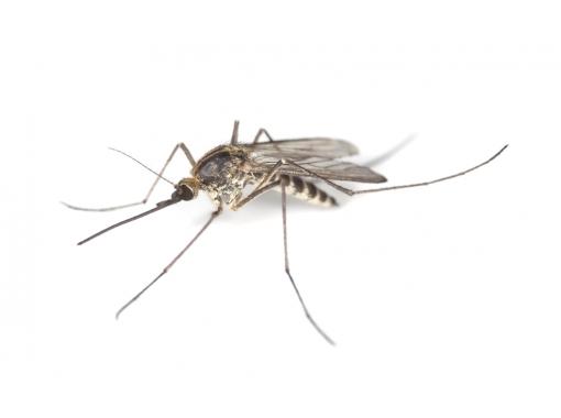 Як захистити новонародженого від укусів комарів і комах