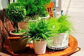 Дитина першого року життя та кімнатні рослини