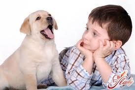 Домашня тварина для дитини-алергіка
