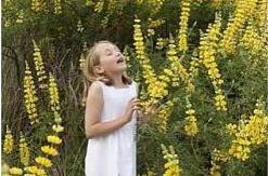 Алергія на квітковий пилок