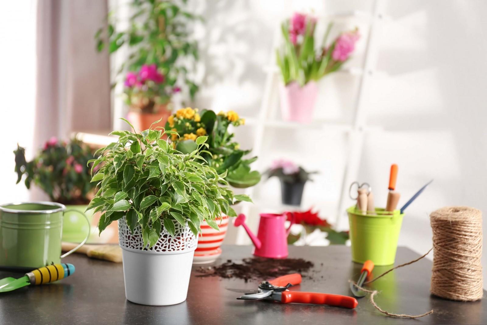 Комнатные растения: польза или вред?